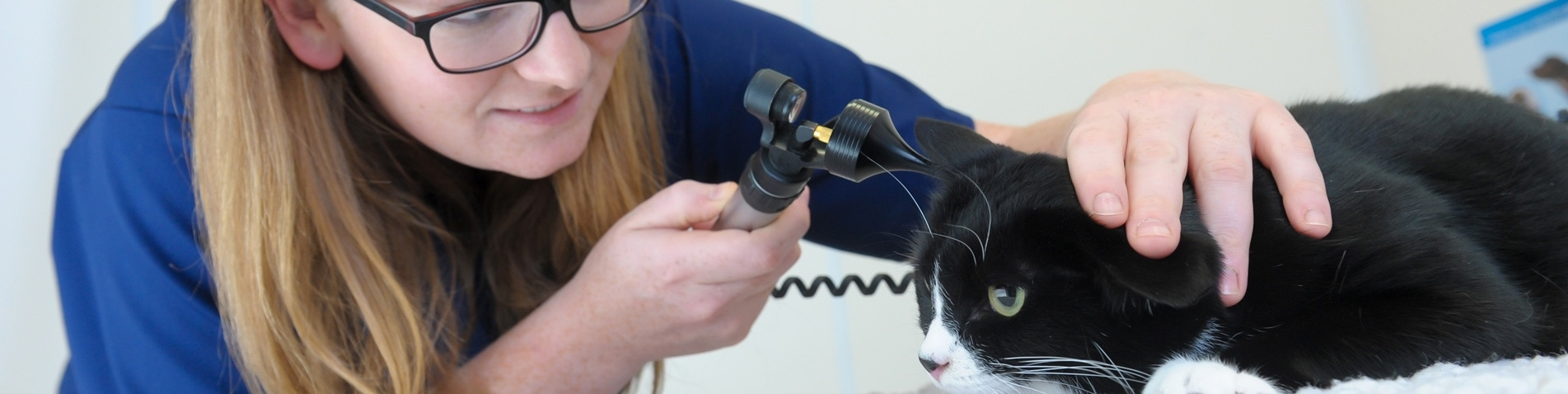 Vet Nurse Clinics Swansea | Gower Vets