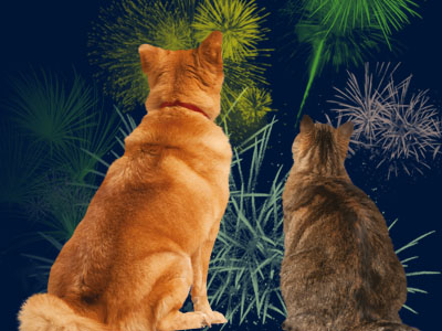 Help with animal anxiety for Halloween and Bonfire Night