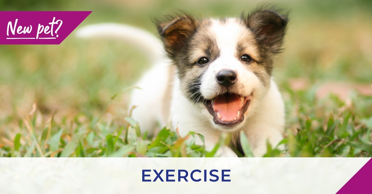 Poster For Exercise with Puppy on grass