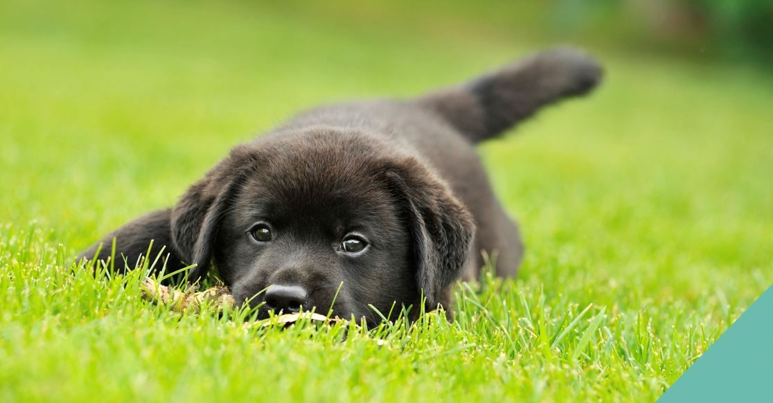 Black Puppy Lying on Grass