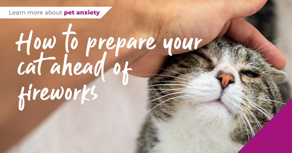 prepare cat for fireworks