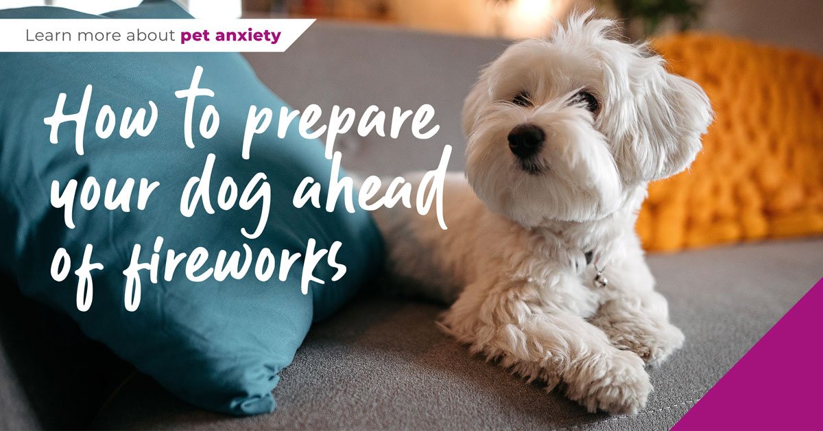prepare dog for fireworks