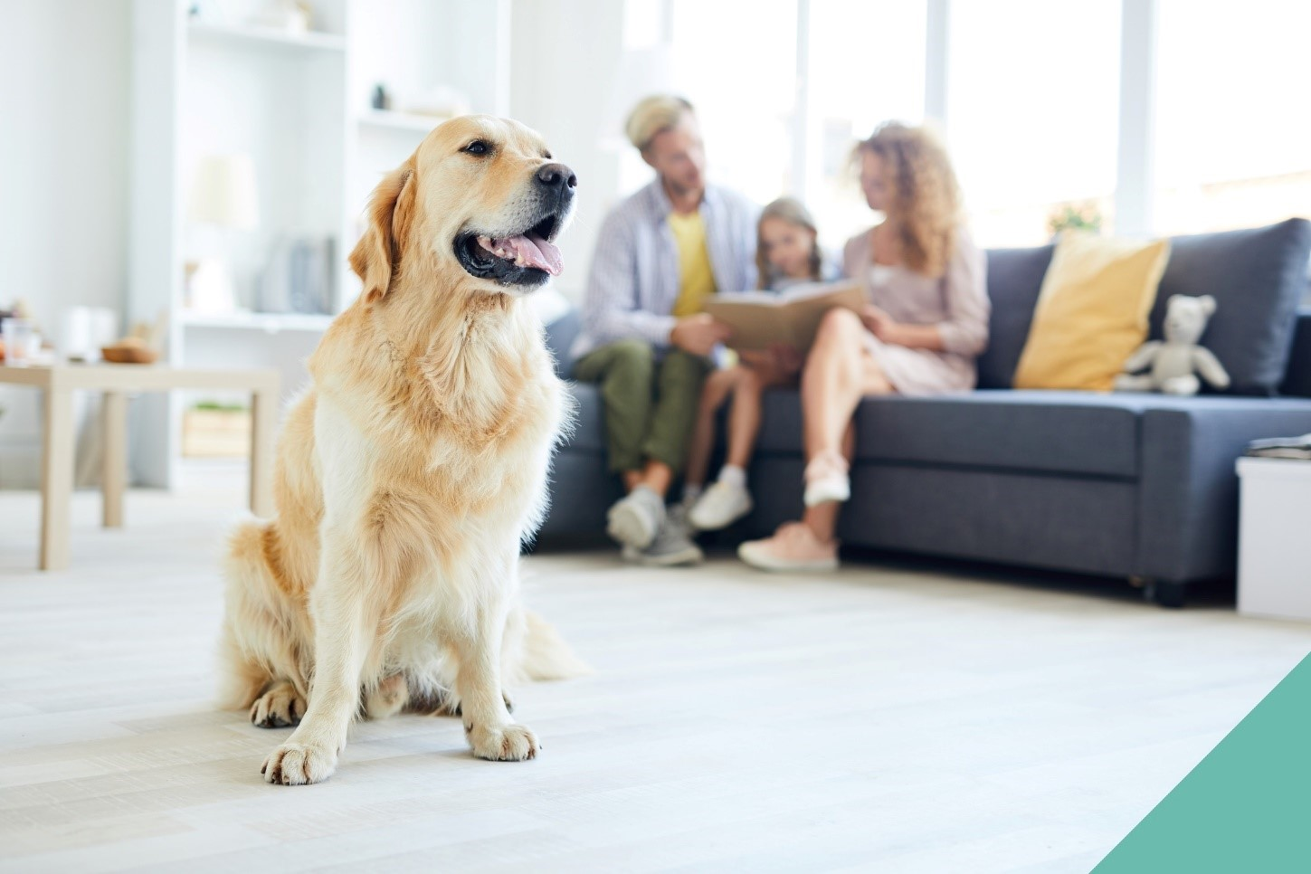 preparing pet for home life changes