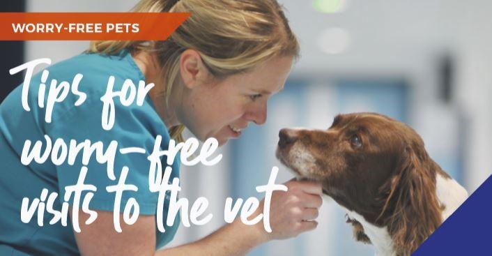 dog visiting vets