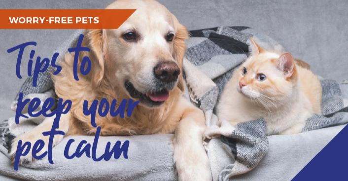 keep your pet calm